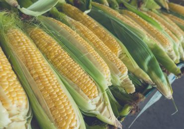 Corn in a husk - how to grill corn on the cob right